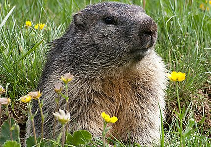 Groundhog Day–Is Winter Over Yet?