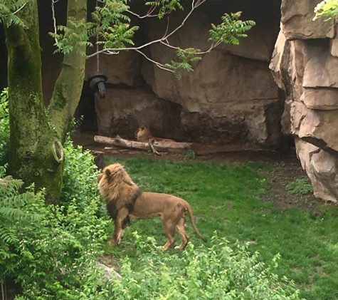 Renaissance Field Trip: Zoo Slideshow